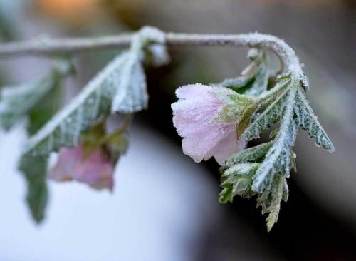 アニソド雪の翌朝1wb.jpg