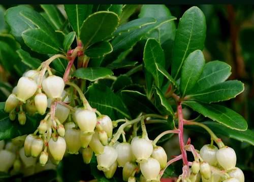 イチゴの木08-3葉wb.jpg