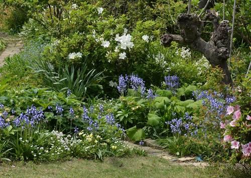 シラーの庭2015wb.jpg