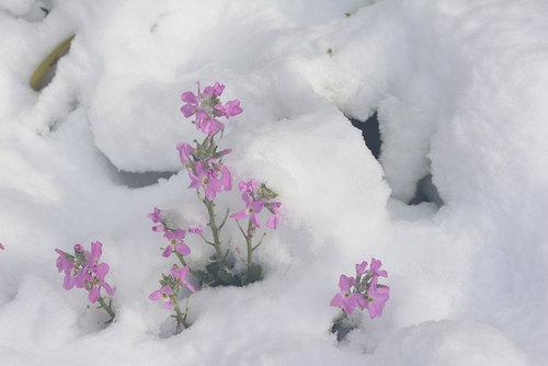 ストック雪wb.jpg