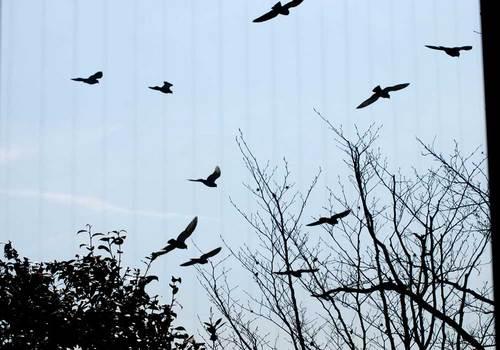 ハトの蔭wb.jpg