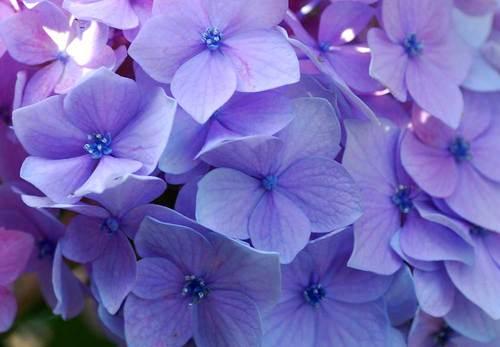 七色V装飾花wb.jpg