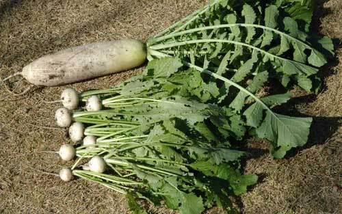 収穫1wb.jpg