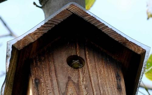 巣箱の蛙wb.jpg