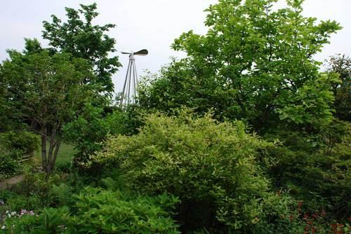 樹々緑wb.jpg