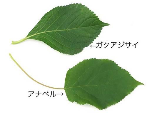葉の比較@2wb.jpg