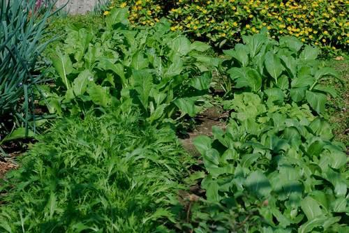 野菜091029-2wb.jpg