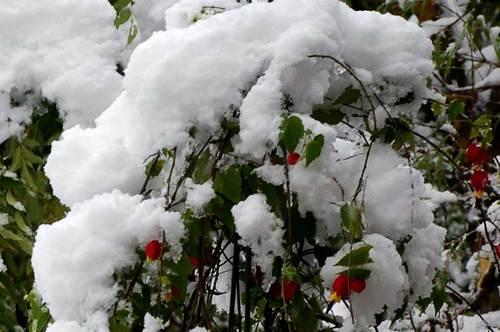 雪チロリアン2wb.jpg