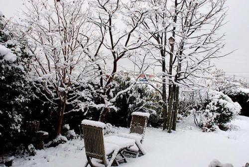 雪ボダイジュwb.jpg