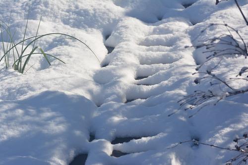 雪小径wb.jpg